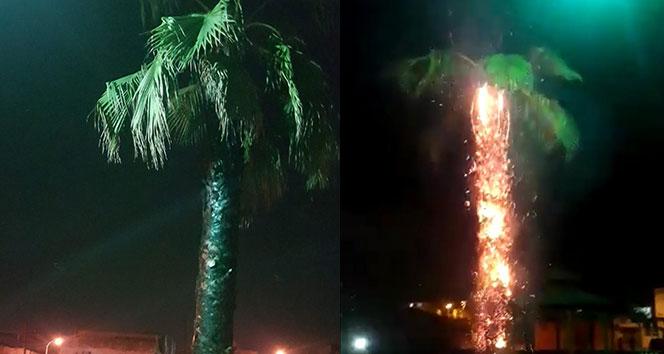Parktaki ağacı ateşe verdiler