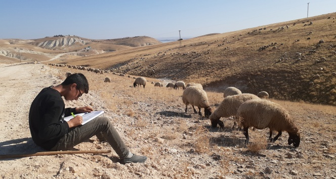 Ara tatilde hem çobanlık yapıyor hem de ders çalışıyor