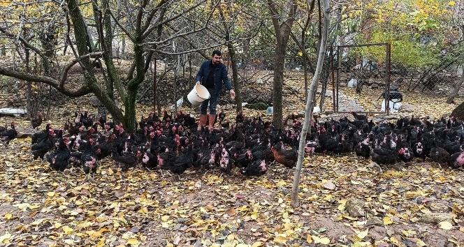 İşsiz kaldı, kendi imkanları ile tavuk çiftliği kurdu