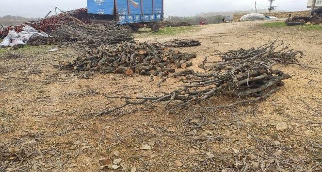 Isınmak için ağaçları kesiyorlar