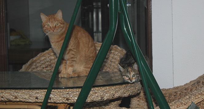 Ordu'da şaşkınlık veren olay: Sokak kedisi adeta terör estiriyor
