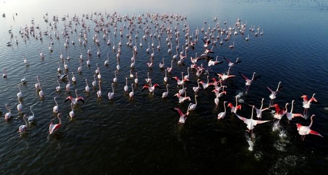 Kis Mevsimi Iliman Gecince Flamingolar Goc Etmedi