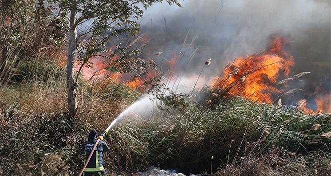 Sazlık yangınında bazı evler tahliye edildi