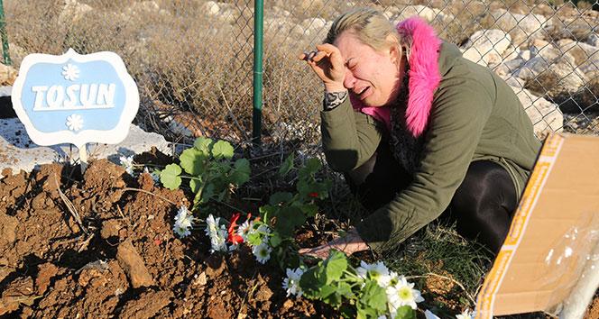 Depremde kalp krizinden ölen köpek Mersin'deki hayvan mezarlığına gömüldü