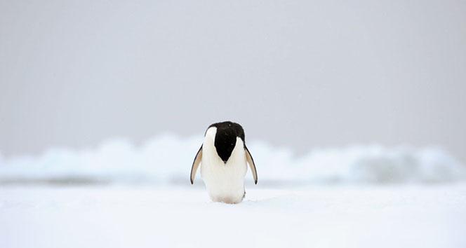 Antarktika'da sıcaklık 20.7 dereceye yükselerek rekor kırdı.