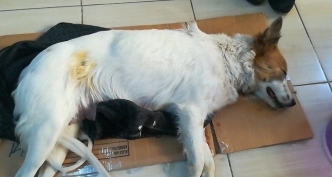 Köpeğe taş atarak ölmesine yol açan şahıs hakkında suç duyurusu