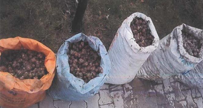 İzinsiz salyangoz toplayan 5 kişiye 10 bin lira para cezası