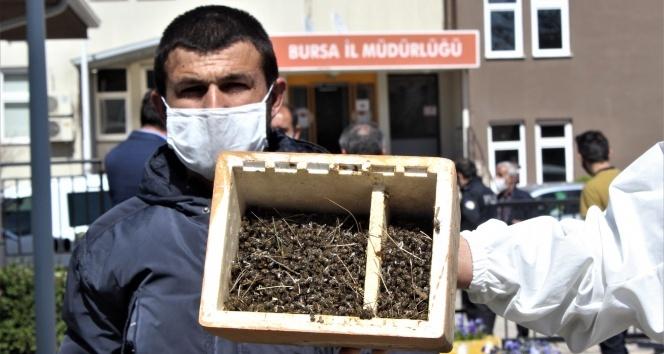 Bursa'da binlerce arının şok eden ölümü...Ölen arılarıyla müdürlüğe geldiler