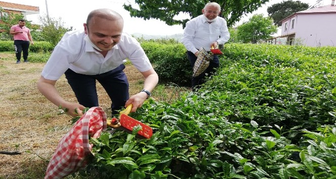 CHP Giresun Milletvekili Tığlı, Yaş Çay Fiyatını Iyi Buldu, Kotayı ...