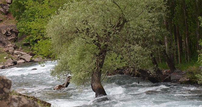 Berrak su yeşilliklerle birleşti, kartpostallık görüntüler oluştu