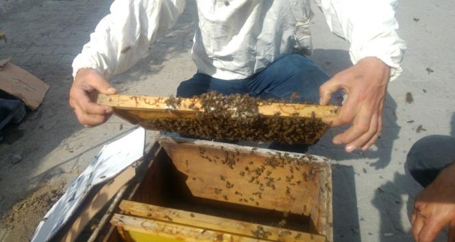 Firari arılar herkesi seferber etti