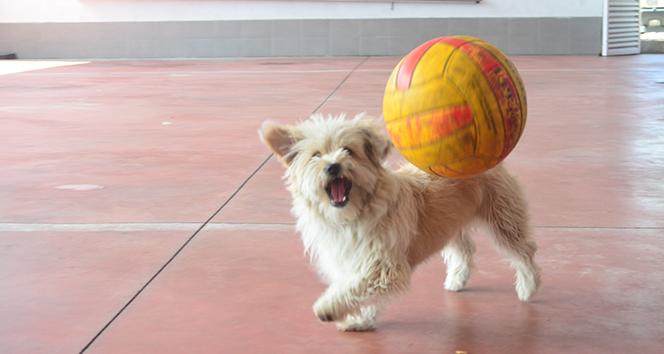 İtfaiyenin maskotu sevimli köpek 'Leydi'