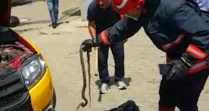 Taksinin motoruna yılan girdi