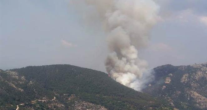 Milas'ta orman yangını