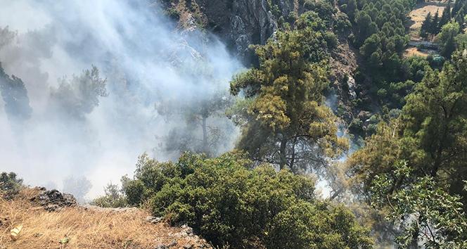 Manisa'da ormanlık alanda yangın