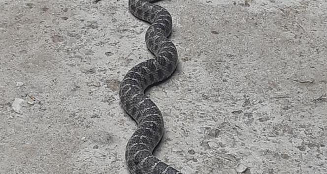 Nazilli'de çatıdaki yılan korkuttu