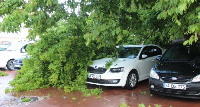 Fırtınanın devirdiği ağaç, otomobillere zarar verdi