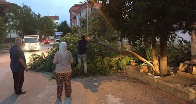 Rüzgar ve sağanak yağışla çatı uçtu, ağaçlar devrildi