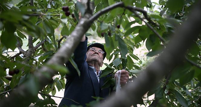 Bu bahçedeki sebze ve meyveler 23 yıldır ücretsiz
