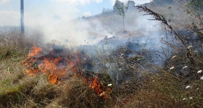 Tuzla'da otluk alanda yangın çıktı, çekirgeler kaldırımı istila etti