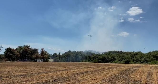 Saros Körfezinde orman yangını