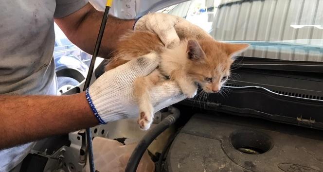 Aracın far kısmına girip sıkışan yavru kedi kurtarıldı