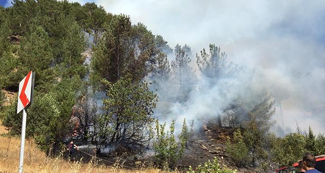 Kahramanmaraş'ta orman yangını 7 hektar alan zarar gördü