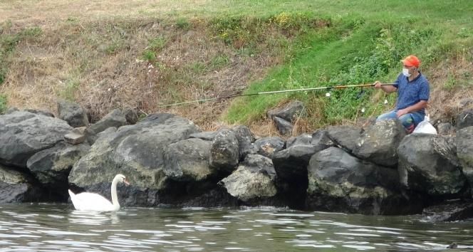 Kuğu ile balıkçıların dostluğu
