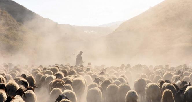 15 kilometrelik tozlu yolculuk süt sağımıyla son buluyor