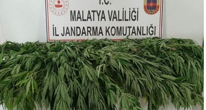 Malatya'da uyuşturucuya darbe
