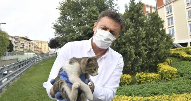 Belediye başkanının dikkati yavru kediyi hayatta tuttu