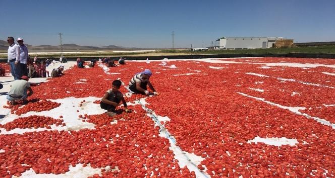 Niğde'de üretilen kuru domatesler 6 ülkeye ihraç ediliyor