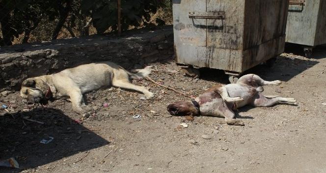 Emekli öğretmen bahçesindeki hayvanların öldüğünü görünce şoke oldu