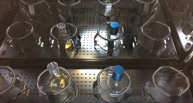 Koronavirüs salgınıyla mücadelede kritik öneme sahip '3CLpro' enzimi üretildi