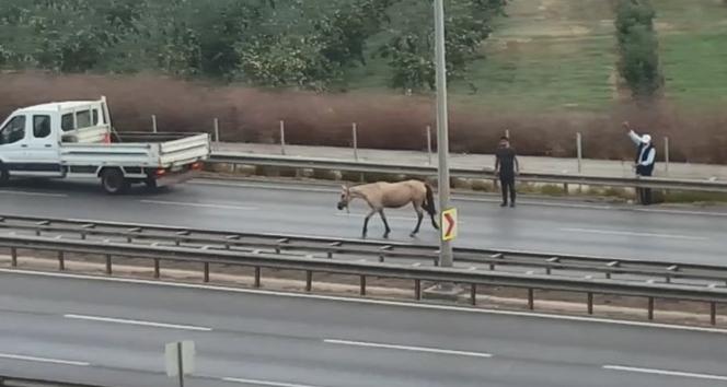 Bursa'da başı boş at dehşet saçtı, o anlar güvenlik kamerasına yansıdı