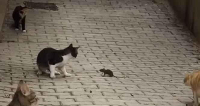 Fare 5 kediye kafa tuttu