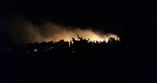 Ayvalık'ta orman yangını!