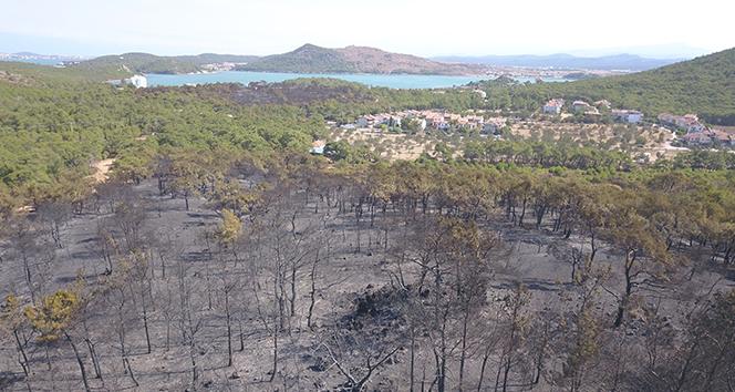 Ayvalık'ta yangında zarar gören bölge havadan görüntülendi
