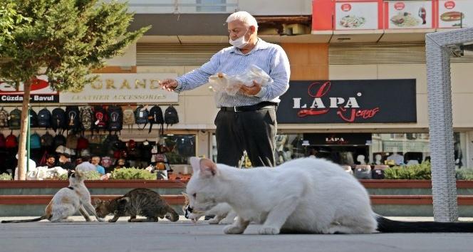 Sesini duyan kediler esas duruşa geçiyor