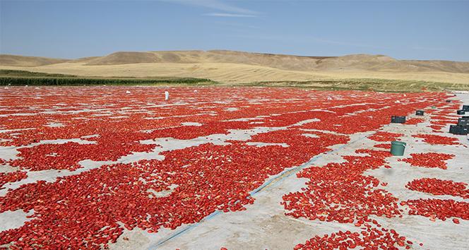 Diyarbakır'dan İtalya'ya uzanan lezzet: Kurutulmuş domates