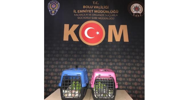 Bolu'da papağan kaçakçılarına operasyon: 2 gözaltı