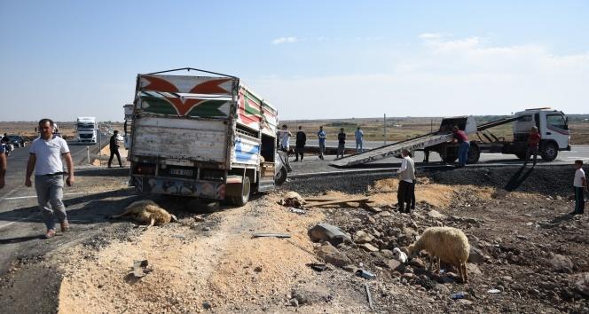 Hayvan yüklü 2 kamyonet kafa kafaya çarpıştı