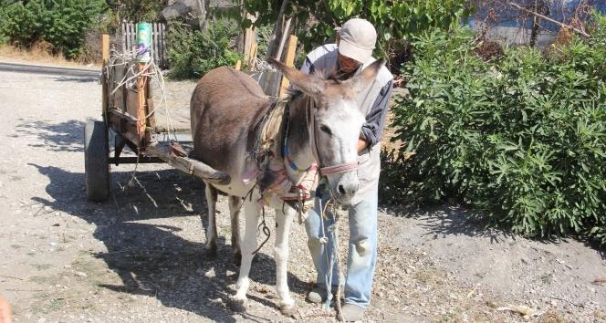 Hayatta tek sahip olduğu 'Kadife'siyle ailesini geçindiriyor
