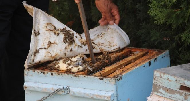 Hatay'daki yangında binden fazla arı kovanı yandı