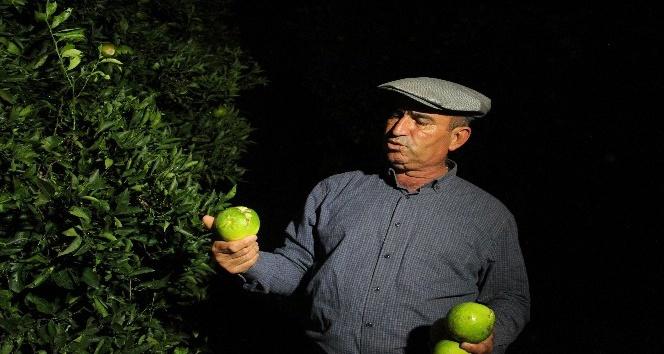 Kumluca'da 2 bin dönüm sera, 500 dönüm narenciye bahçesi zarar gördü