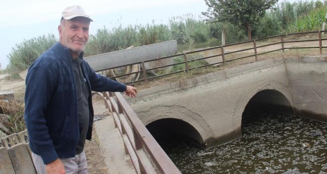 Barajlardan gelen su kesilince balıklar telef oldu