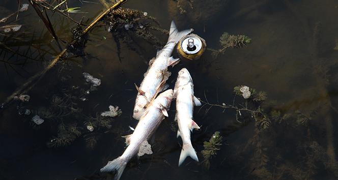 Antalya'da deredeki balık ölümlerinde kimyasal madde ihtimali