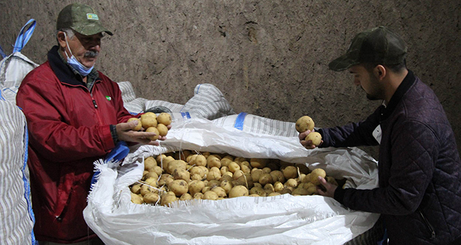 Yerli patates tohumu ile ithalatın önüne geçilecek