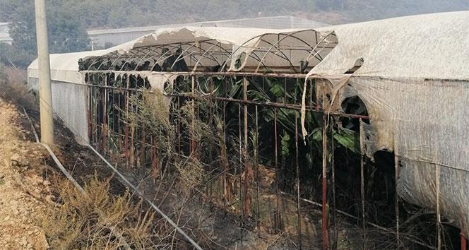 Mersin'deki yangında ev ve seralar da zarar gördü