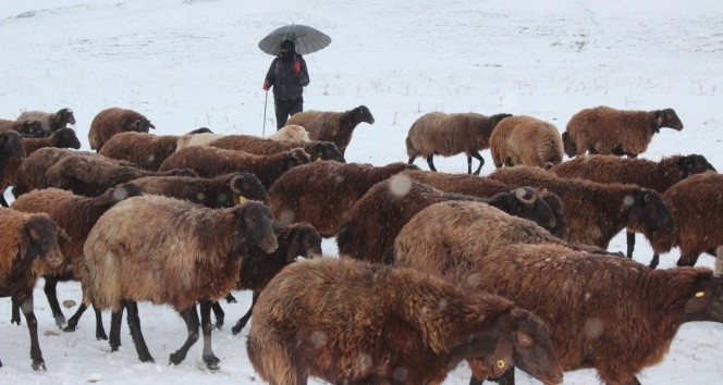 Kar yağışı, hayvanlarını otlatan çobanlara zor anlar yaşattı